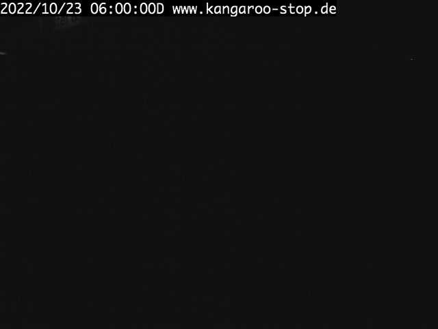 Webcam Hostel kangaroo-stop Dresden